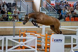 050, Nanolivia VDL<br /> KWPN Kampioenschappen 2021<br /> Ermelo <br /> © Hippo Foto - Dirk Caremans<br /> 13/08/2021
