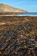 Coastal habitat at Kimmeridge Ledges, Dorset, UK