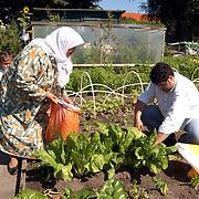 Open dag volkstuinen vereniging Naarden Keverdijk, allochtonen in werken tuin