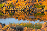 Ripples spread across Soda Lake after a fish jumped out of the water in the Columbia National Wildlife Refuge in Washington state. The sunrise bathes the basalt cliffs on the opposite side of the lake in golden light.