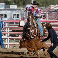 Ribbon ropers Butch Terrell and Bonnie Terrell run down their calf during the Grants Senior Rodeo Thursday at the Grants Rodeo Arena.