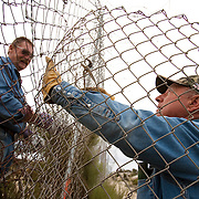 Bob Maupin has lived on the U.S./Mexico border for over 60 years in eastern San Diego County. His fence abuts Mexico and is often used by migrant and drug smugglers to illegally enter the United States. Much of Bob's day, including Inauguration Day on January 20, 2009, is devoted to checking his fence and property for signs of illegal entry. Here, neighbor Dick Buck, left, a Minuteman Civil Defense Corps volunteer,  helps Bob repair the fence cut by smugglers. Please contact Todd Bigelow directly with your licensing requests.
