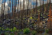 Forest burn, Jasper National Park, Alberta, Canada