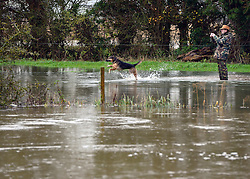 © Licensed to London News Pictures. 26/11/2012. Oxfordshire, UK A man plays with his dog in floodwater on the Thames. Flooding on the River Thames today 26th November 2012 in Oxfordshire. Photo credit : Stephen Simpson/LNP