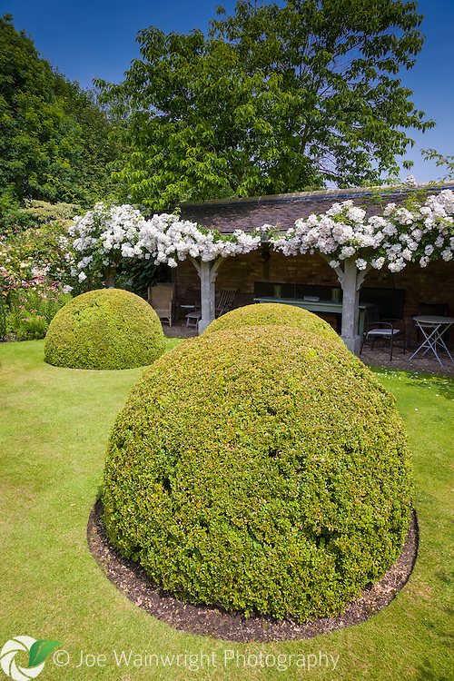 Rosa 'Francis E Lester' swathes the loggia in the Font Garden at Wollerton Old Hall Gardens, Shropshire. This image is available for sale for editorial purposes, please contact me for more information.