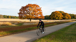 © Licensed to London News Pictures. 28/10/2016. London, UK. Local residents continue to enjoy the amenities as the annual deer rut takes place in Richmond Park on a fine autumnal day. Photo credit : Stephen Chung/LNP