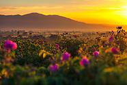 Danubian & Thracian Plains