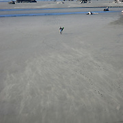 Surfing isn't as popular in Oregon due to the colder waters. Here a lone surfer is carrying is board back to shore after surfing during the afternoon.   Wind is blowing sand along the beach.