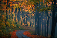 Wet road covered with autumn leaves in a a forest