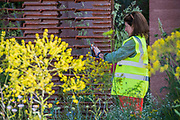 Final inspections of The M&G Garden, Sponsor: M&G Investments, Designer: Sarah Price and Contractor: Crocus - The RHS Chelsea Flower Show at the Royal Hospital, Chelsea.