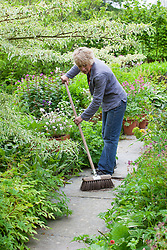 Replacing pots of spent narcissus with Geranium clarkei 'Kashmir White'. Carol Klein sweeping up afterwards