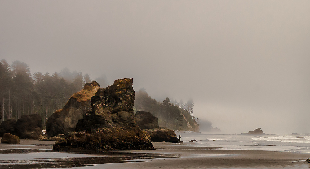 Low tide among the sea stacks with the ocean fog rolling up the coastal forest.