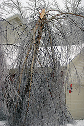 01 December 2006:  A river birch tree snaped at the roof line of this suburban home due to the strain created by ice and wind. A sharp winter storm swept into Central Illinois and the Bloomington-Normal area causing power outages, road closures, white out conditions, tree damage, and virtually every large business and schools to close.<br />
