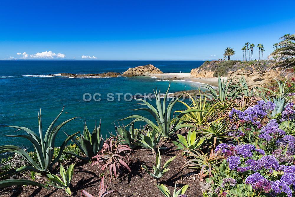 Scenic Laguna Beach from the Montage Resort