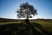 silhouetted tree on top of a hill in a grassland landscape