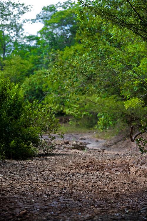 Januaria_MG, Brasil...A fazenda Agroecologica Soma, se intitula uma fazenda produtora de agua. Localiza no municipio de Januaria, a 250 km de Montes Claros, usa a tecnica de Barraginhas ou Bacias de Captacao de Agua de Chuva para recuperar os lencois freaticos e consequentemente os rios da regiao. Em 2005, foram construidas mais de 300 barraginhas na regiao, e acredita-se que o volume de agua dos lencois freaticos cresceu, inclusive com a recuperacao de um rio que corta a propriedade...Na foto, detalhe de um corrego seco na regiao da fazenda...The Soma Agroecology farm, is called a farm producing water. Located in the city of Januaria, 250 km from Montes Claros, uses the technique  rainwater catchment to recover the ground water and consequently the rivers of the region. On 2005, they built 300 dam or rainwater catchment in the region, and it is believed that the volume of water of groundwater has grown, including the recovery of a river in the property...In this photo a dry stream in the farm region...Foto: BRUNO MAGALHAES / NITRO