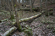 Mixed forest with lots of fallen trees (Coarse woody debris) next to Tildurga stream, Gauja National Park (Gaujas Nacionālais parks), Latvia Ⓒ Davis Ulands | davisulands.com