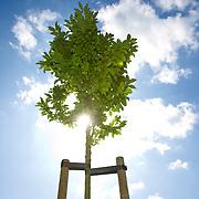 Nederland Liesveld 25-07-2009 20090725 Foto: David Rozing ...Nieuwe aangeplante bomen in Liesveld  groene hart plant bomen in eigen land ter CO2-compensatie. duurzaam, duurzaamheid, fresh air, blue sky, green, small tree, zonnig, zonnige, sunny, voorjaar, spring, springtime, no person, scenic, fresh, sprankling light, zonnestraal, zonnestralen, zomer, zomers, blad, blaadjes, fris, creative, wolken, ..Foto: David Rozing