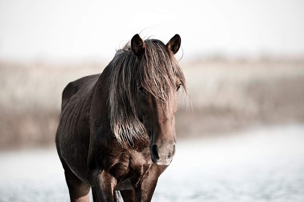 """""""Keep calm and carry on"""" ~ Winston Churchill<br /> <br /> Tracie Spence's fine art photography series of The Spanish Wild Mustangs."""