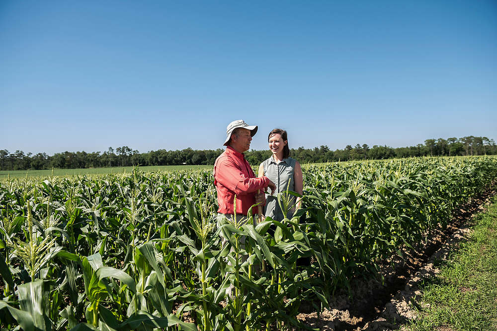 Casey Cox and her dad, Glenn in a corn field. Casey is becoming the sixth generation to farm the family's land in Mitchell County, Georgia.