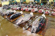 Tsukiji Fish Market / Tokyo Metropolitan Central Wholesale Market
