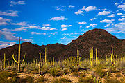 Hundreds of saguaros (Carnegiea gigantea) fill the valley at the base of the Red Hills, which were cast into shadow by passing clouds, in Saguaro National Park, Arizona.