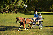 Old Bethpage, New York, USA. 28th September 2014. Chef the miniature horse is pulling a small cart with two redhead boys, the younger one wearing a helmet, as dusk approaches at the 172nd Long Island Fair, a six-day fall county fair held late September and early October. A yearly event since 1842, the old-time festival is now held at a reconstructed fairground at Old Bethpage Village Restoration. Chef is a 9-year-old horse, and the younger boy is holding the reins and driving.