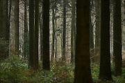 Nederland, Berg en Dal, 28-12-2016 Het bos wordt door veel mensen gebruikt als plek voor recreatie. het Rijk van Nijmegen kent een gevarieerd landschap en is rijk aan bossen. FOTO: FLIP FRANSSEN