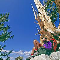 Allan Pietrasanta relaxes by ancient bristlecone pine in White Mountains, California.