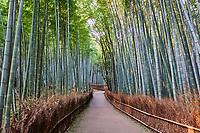 Japon, île de Honshu, région de Kansaï, Kyoto, la bambouseraie, Forêt de bambou d'Arashiyama - Sagano // Japan, Honshu island, Kansai region, Kyoto, Arashiyama Sagana, a bamboo forest