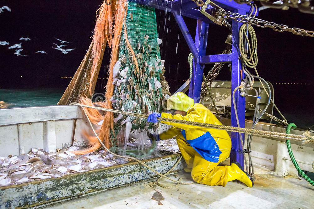Luke empties the first net of the evening, there are 3 nets out each time. Luke is a Folkestone based fisherman out trawling for a 12 hour night shift on a fishing trip in his boat Valentine FE20, Hythe Bay, the English Channel, United Kingdom.