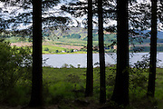 View through larch trees and across the loch to croft cottages in Argyllshire, Western Scotland
