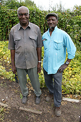 A couple of elderly Men working on their allotments,