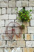 Lobster net hanging on stone wall, Dubrovnik, Croatia