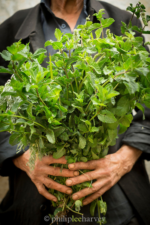Close up of person holding fresh lush green mint leaves at food market, Casablanca, Morocco