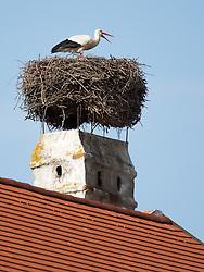 THEMENBILD - Die Freistadt Rust am Neusiedlersee wird auch Hauptstadt der Stoerche genannt. Der Weissstorch (Ciconia ciconia) zaehlt zu den groessten Landvoegeln Europas. Das Federkleid ist bis auf die schwarzen Schwungfedern rein weiss. Schnabel und Staender sind rot. Hier im Bild ein Weissstorch in seinem Nest am Kamin eines Ruster Wohnhauses. Aufgenommen am 19.05.2013 in Rust. // THEMES IMAGE - The town of Rust on Lake Neusiedl is also called the capital of the storks. The White Stork (Ciconia ciconia) counts the largest land birds in Europe. The plumage is pure white except for the black wing feathers, beak and uprights are red. This image shows a white stork sitting in his Lair on the chimney of a residential house of Rust. Pictured in Rust, austria on 2013/05/19. EXPA Pictures © 2013, PhotoCredit: EXPA/ Johann Groder