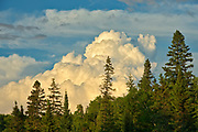 Storm clouds and boreal forest<br />
