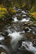 Fall colors along Hylite Creek near Bozeman, Montana.