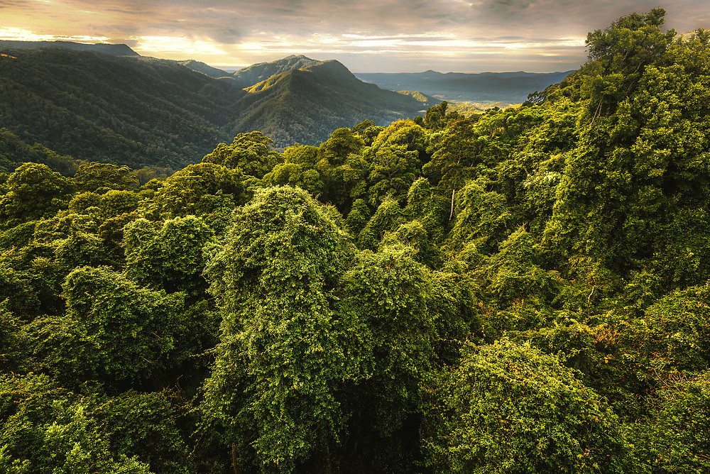 Gondwana Rainforests at Dorrigo National Park, New South Wales