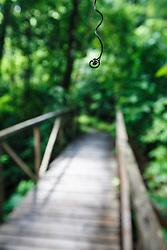 Trail and bridge in Manuel Antonio National Park, Costa Rica