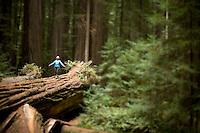 Redwood National Park, CA