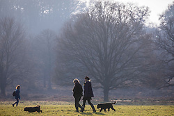 © Licensed to London News Pictures. 29/12/2019. London, UK. Dog walkers and families enjoy unseasonably warm weather in Richmond Park as weather forecasters predict the warmest New Year's Eve for years. Photo credit: Alex Lentati/LNP