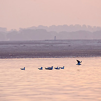 Birds at sunrise close to the shore of the ganges at Varanasi