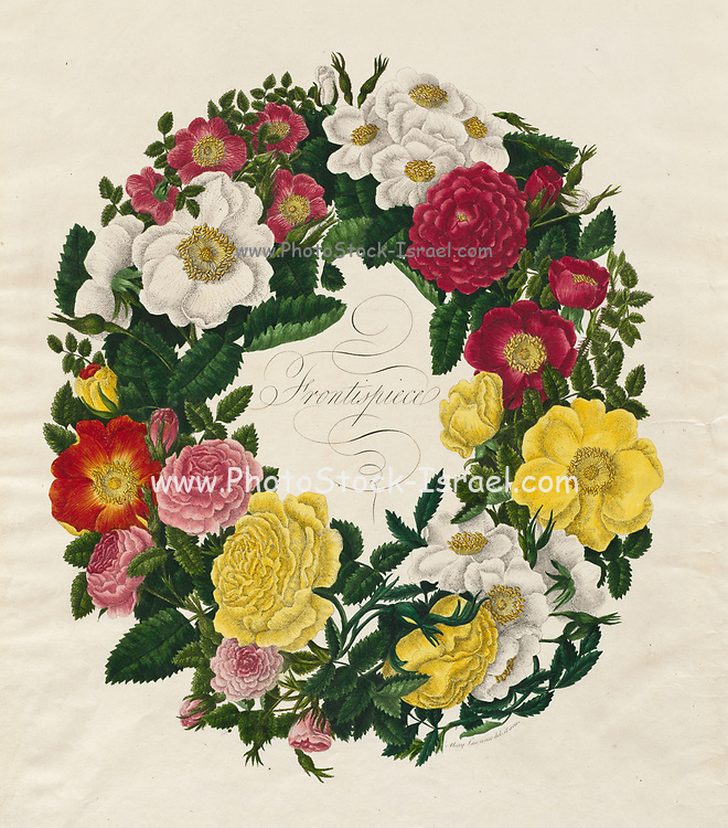 A Wreath of Roses (1799) by Mary Lawrence England, late 18th Century Etching and stipple, hand colored