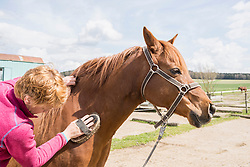 Woman grooming a horse in ranch, Bavaria, Germany