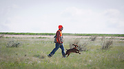 SHOT 5/9/20 8:52:16 AM - Various pointing breeds compete in the Vizsla Club of Colorado Licensed Hunt Test Premium at the Rocky Mountain Sporting Dog Club Grounds in Keenesburg, Co. (Photo by Marc Piscotty / © 2020)