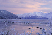 Turnagain Arm in winterAlaska.  Weak winter light illuminates a peak in the Chugach Mountains. Chunks of sea ice float in the waters of Turnagain Arm.  This area is surrounded by the Chugach National Forest.    Black spruce tree ( Picea mariana) in foreground.