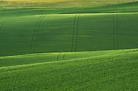 Rolling hills of green wheat fields in the Palouse region of the Inland Empire of Washington