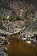 River Vildoga and sandstone cliffs along it, Gauja National Park (Gaujas Nacionālais parks), Latvia Ⓒ Davis Ulands   davisulands.com