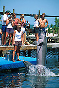 Tourists watch a performance by bottle nose dolphins at the Dolphin Research Center  June 27, 1996 in Marathon Key, FL.  The center is where the original Flipper was trained and specializes in returning trained dolphins to the wild.